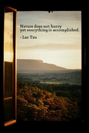 lao tzu quote nature