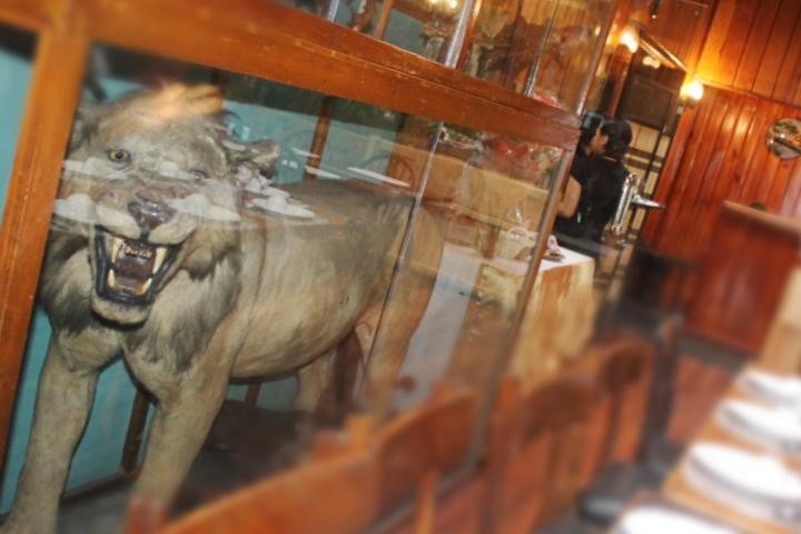 stuffed lion safari lodge baguio city