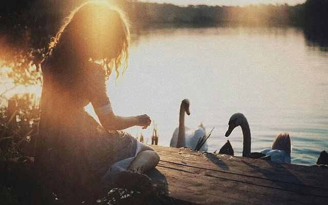 by the lake feeding geese via flickr