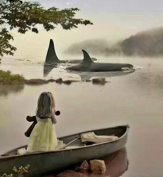 orca-sighting-by-girl-on-boat-via-pinterest