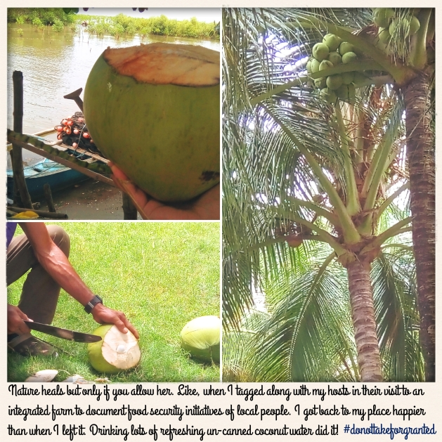 coconut farming