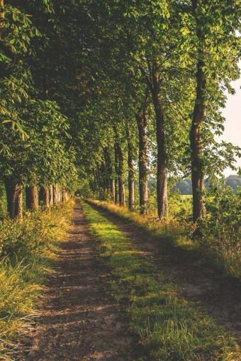 Treelined driveway